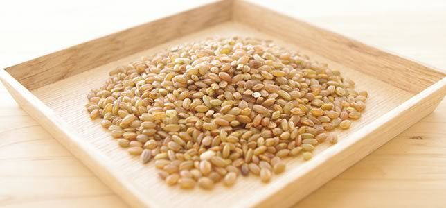 有機栽培 古代赤米